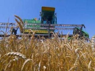 Ставропольские аграрии ожидают хороший урожай